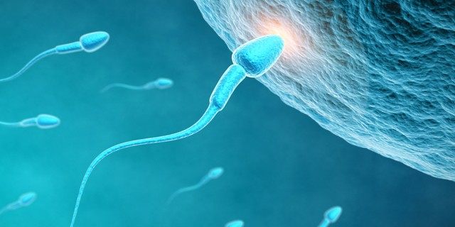 Understanding The Most Common Fertility Treatments And Their Success Rates