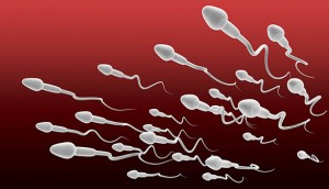 A microscopic perspective view closeup of a group white sperm swimming in the same direction on a red and maroon background