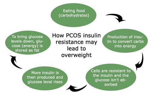 insulin production pcos overweight